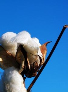 organic cotton, green clean, clean green, boulder cleaning, boulder green clean